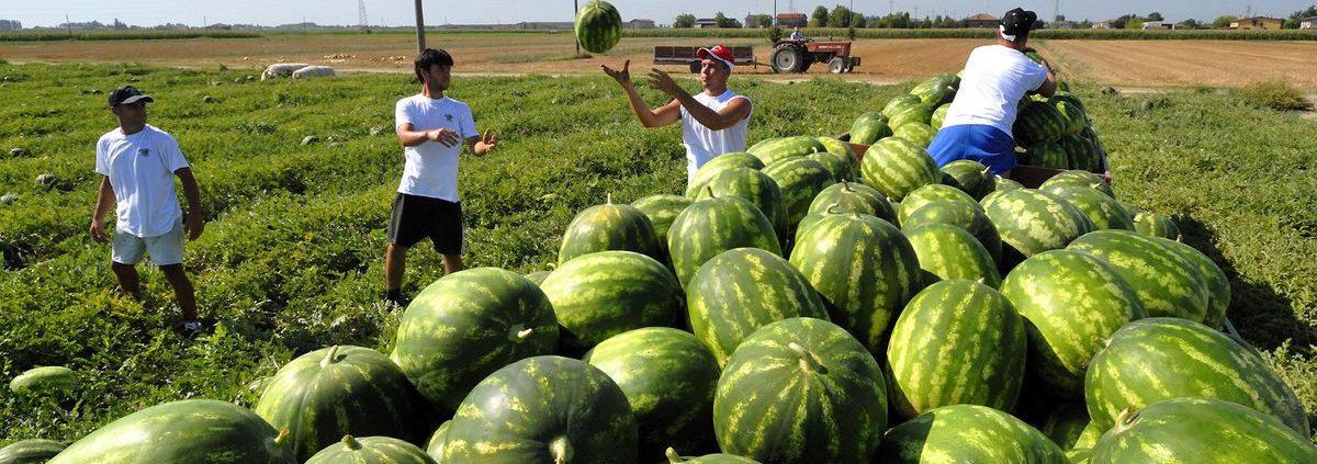 lavori occasionali accessori in agricoltura